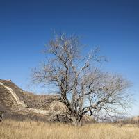 Another Tree near the Great Wall of China by drevil in Regular Member Gallery