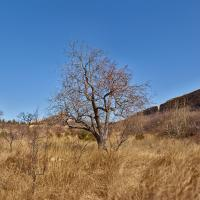Tree by the Great Wall of China by drevil in Regular Member Gallery