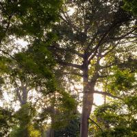 Sunbeam In Singapore Botanical Gardens by monk in Regular Member Gallery
