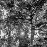 Sunbeam In Singapore Botanical Gardens by monk