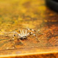 Counter-top Spider by monk
