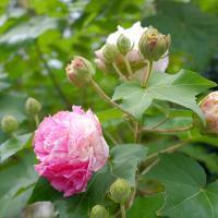 Flower01 by monk