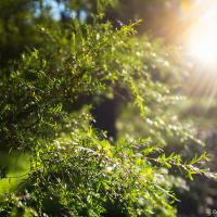 Sunlight After A Night Of Rain01 by monk