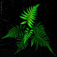 Fern Family by dave.gt in dave.gt