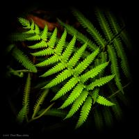 Ferns Rule by dave.gt in dave.gt