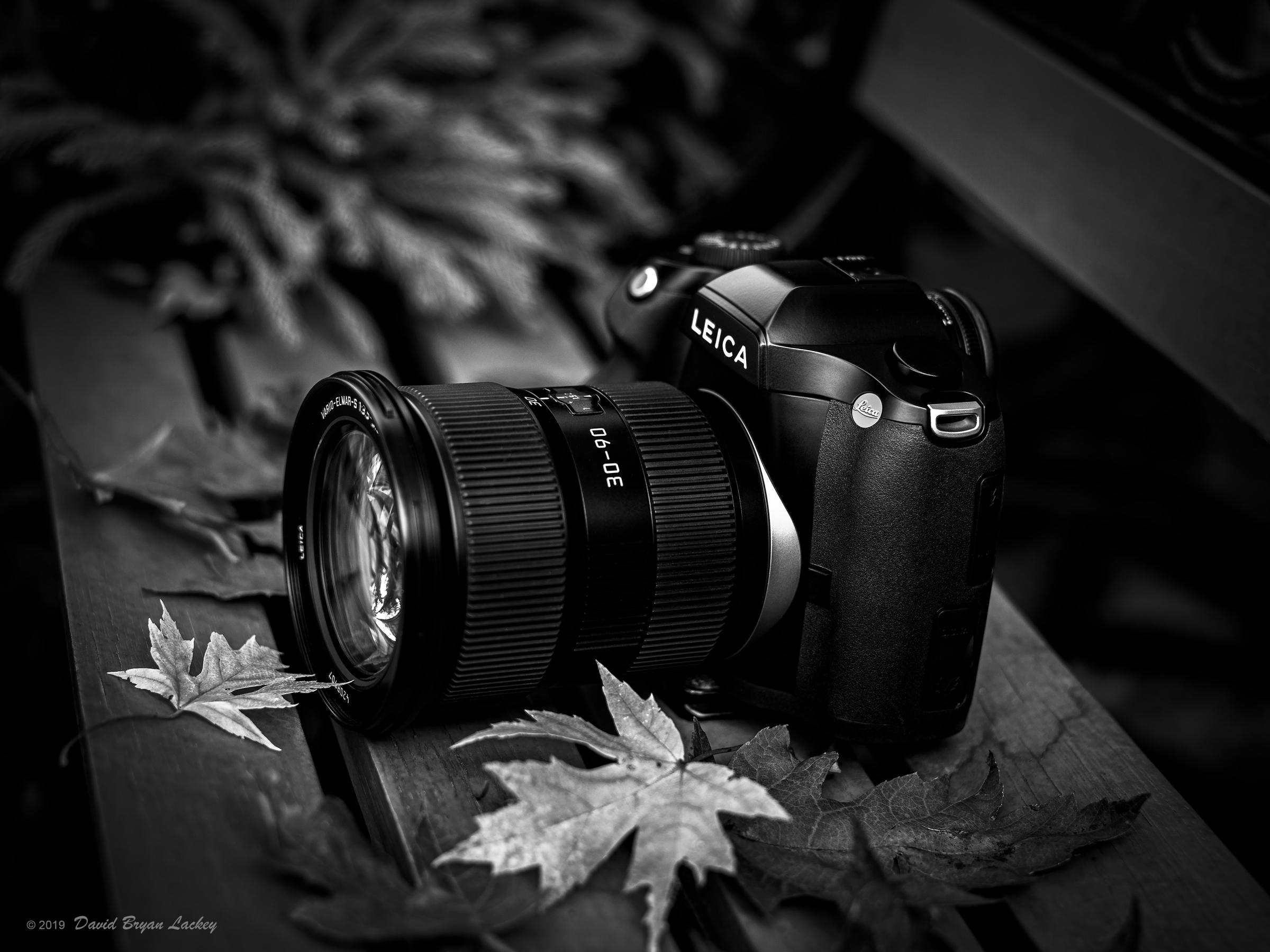 Leica S on Autumn Bench by dave.gt in dave.gt