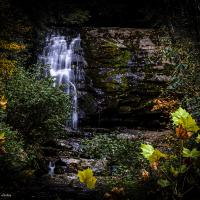 Waterfall in the Forest by dave.gt