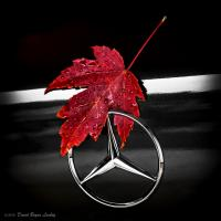 Autumn Leaf Silver Star by S by dave.gt