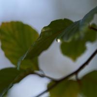 edge of leaf