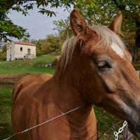 one horse by Thorkil in Thorkil