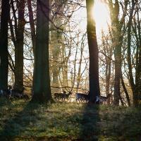 Morningmood by Thorkil in Thorkil