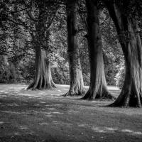 Milntowntree2 by dunders