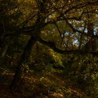 fall by edouard