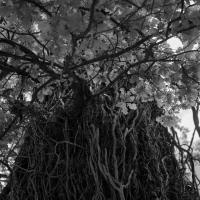 yggdrasil by edouard