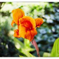 Flower Canon599c7302jul 20 2014