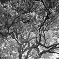 Ir Tree 2 by ChrisDauer in 2007 11 - New Zealand