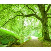 Tree In Green by weinlamm in Regular Member Gallery