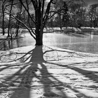 Shadow by wosim in Regular Member Gallery