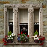 Window Dressing by MILESF in Regular Member Gallery