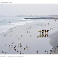Surfers From Npb Pier by jimban in Regular Member Gallery