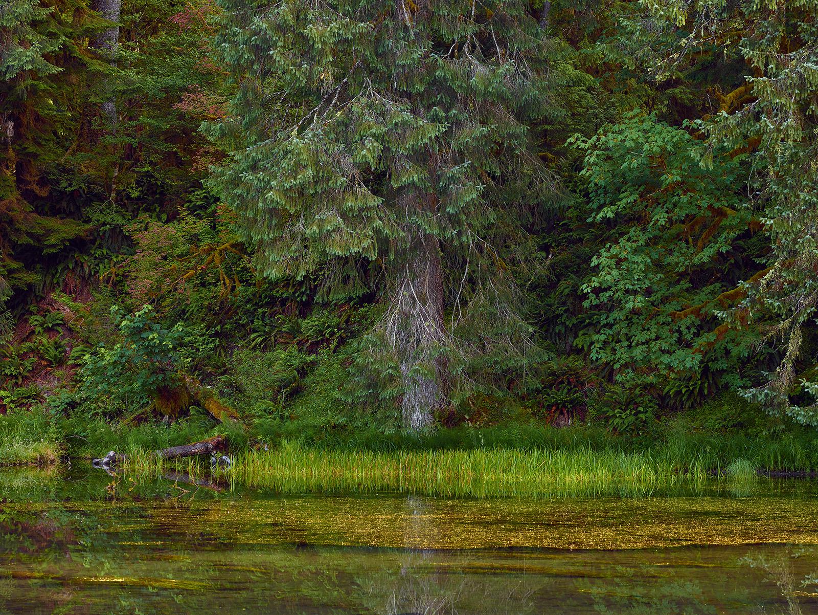 Olymipic National Park by jimban in Regular Member Gallery