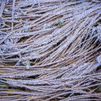 Heavy frost by Shac in Regular Member Gallery