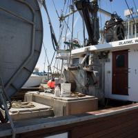 Boats  Blaine 2