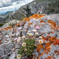 cut-leaved daisy and orange lichen by Shac