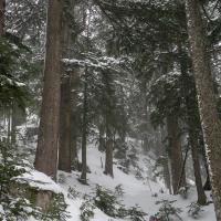 cypress 1 by Shac in Regular Member Gallery