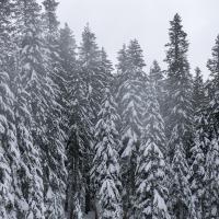 cypress 5 by Shac in Regular Member Gallery