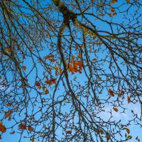 End of fall by Shac