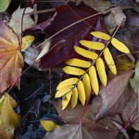 fall 2 468217 by Shac