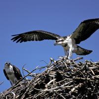 osprey lr by Shac