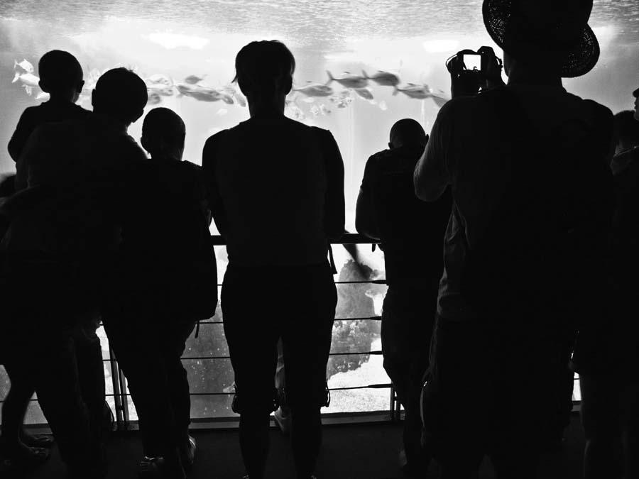 Aquarium Crowd by m3photo in Regular Member Gallery