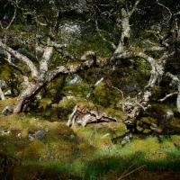 Silver Birch Sutherland by 4*Paul