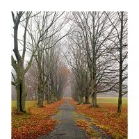 Old Road by BlasR in Regular Member Gallery