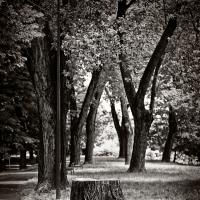 Tree by roberto_pia