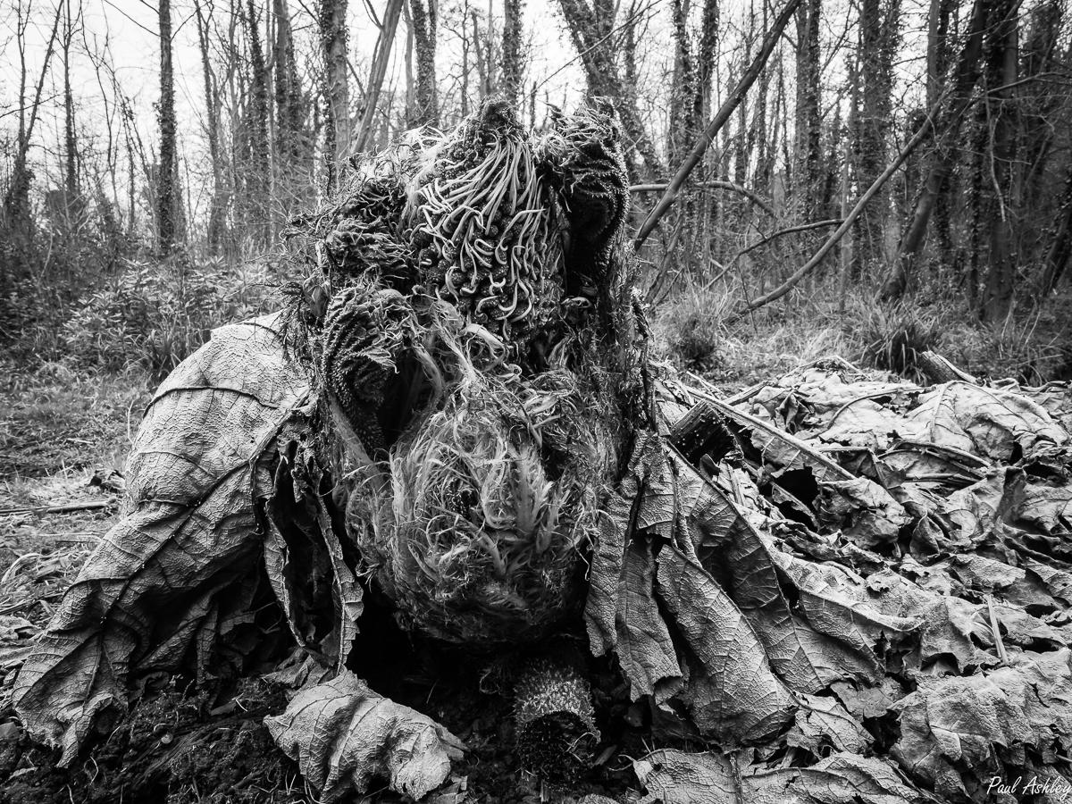 Tree Fern Monster by LocalHero1953 in Regular Member Gallery