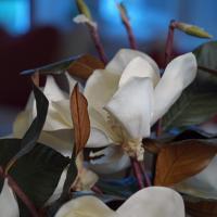 Flower series XiD 90 lens by eleanorbrown in Regular Member Gallery