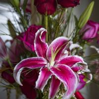 Flowers XiD 90 f3.2 iso 100 by eleanorbrown
