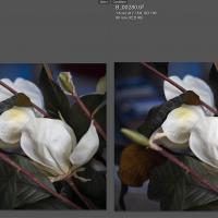 LR vs. Phocus compare by eleanorbrown in Regular Member Gallery