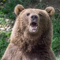 Bear by jaspat3 in Regular Member Gallery