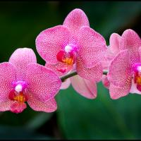 3orchidbeauties by DonWeston