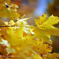 Autumn Leaves 001 by sangio