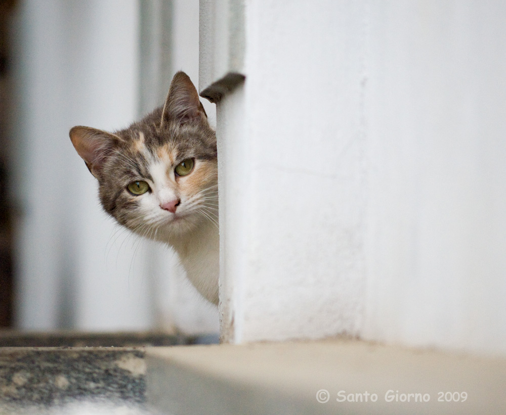 Peek-a-boo Cat by sangio in Regular Member Gallery