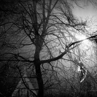 Misty Night by Steve P. in Regular Member Gallery