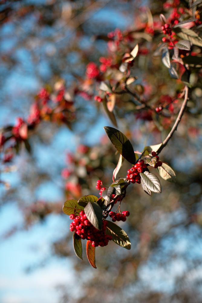 Winter Berries by Steve P. in Regular Member Gallery