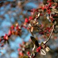 Winter Berries by Steve P.