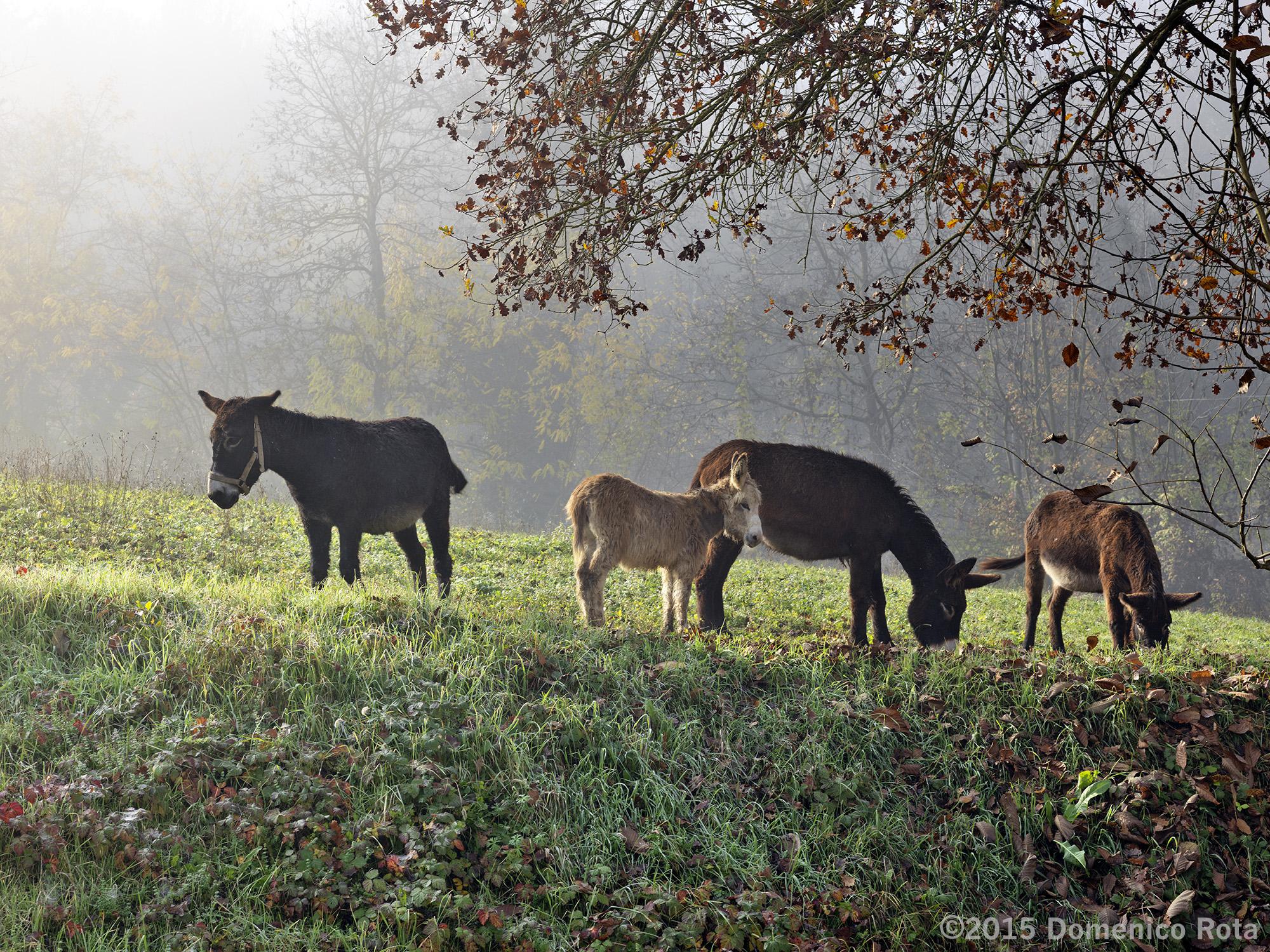 Donkeys in the Fog by modator in Regular Member Gallery