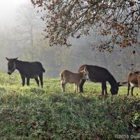 Donkeys in the Fog by modator